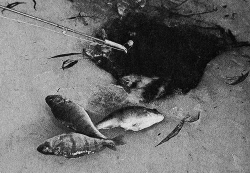 подледная рыбалка в Австрии