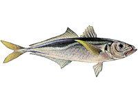 Из воспоминаний рыболова