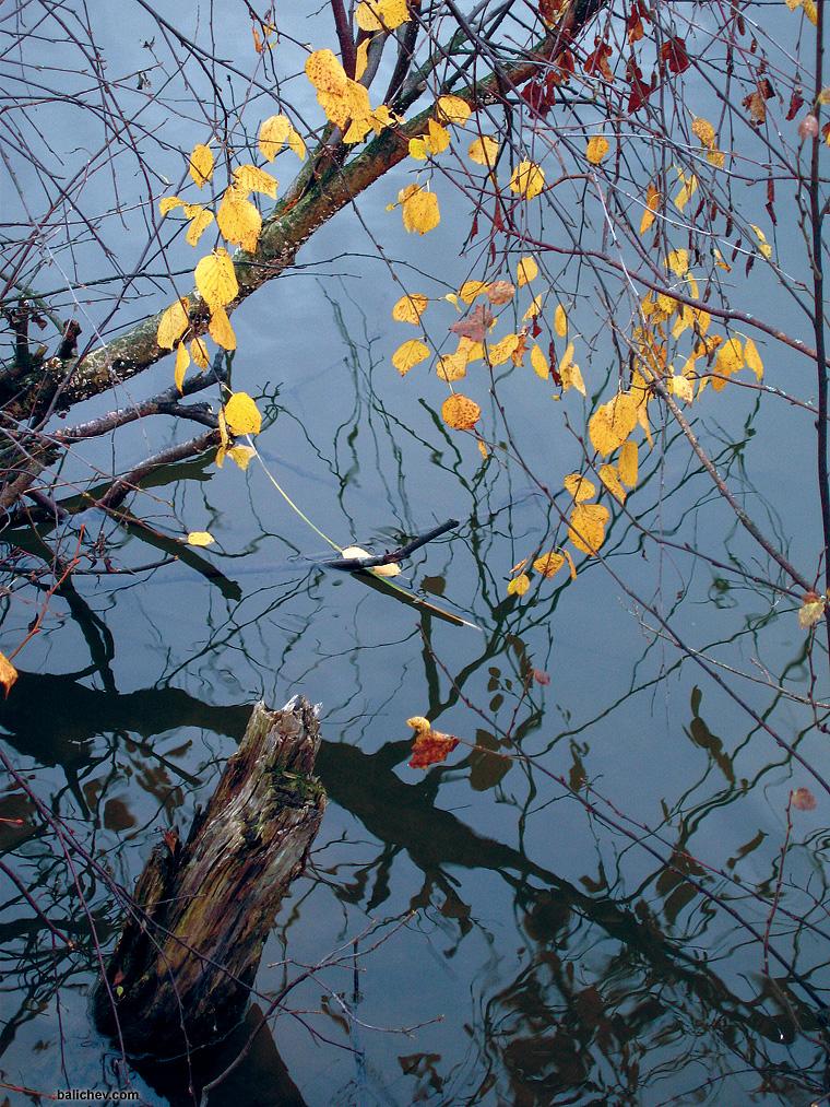 ловля осенью в корягах