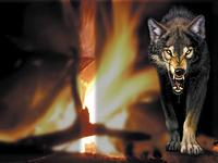 волк у костра