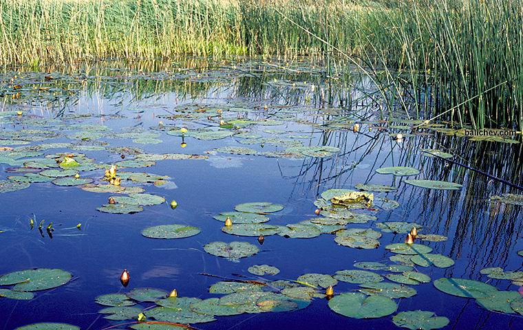 на линевом озере