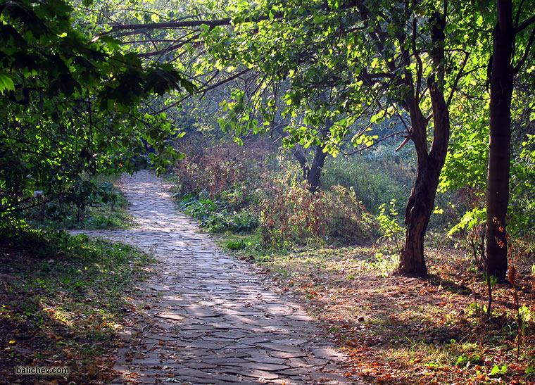 пейзаж в парке