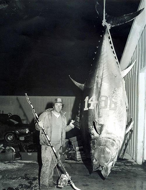 рекордный тунец