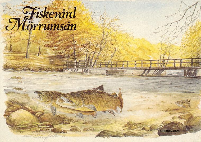 рыболовная открытка
