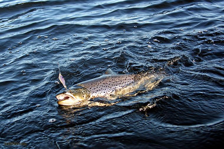 рыба на крючке блесны