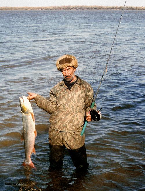 рыболов с желтощеком на амуре