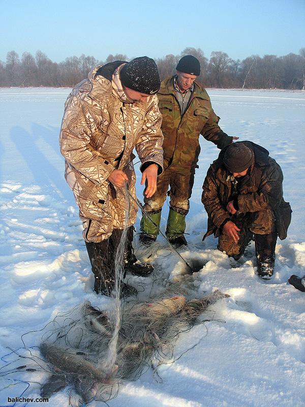 браконьерская сеть зимой